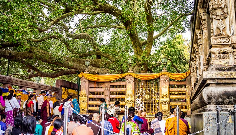 Worship under the Bodhi tree