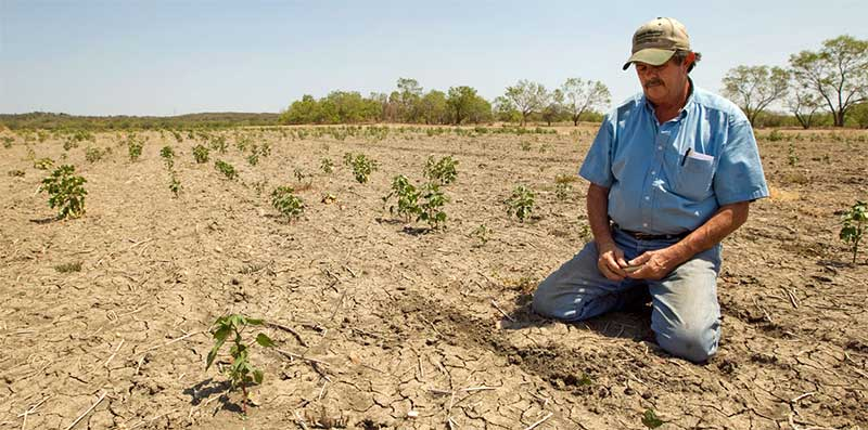 A Texas farmer inspects his crops during the Texas drought of 2011. (source)