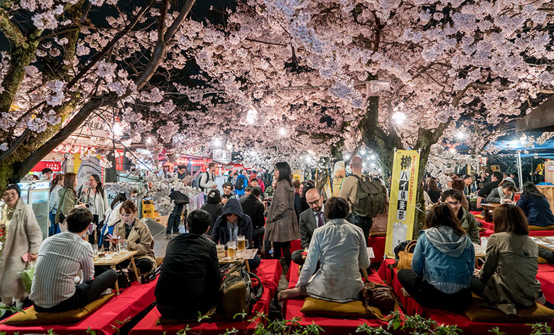 Cherry blossoms and beer in Kyoto
